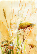 Yarrow & Wild Rye - SOLD (Prints Available)
